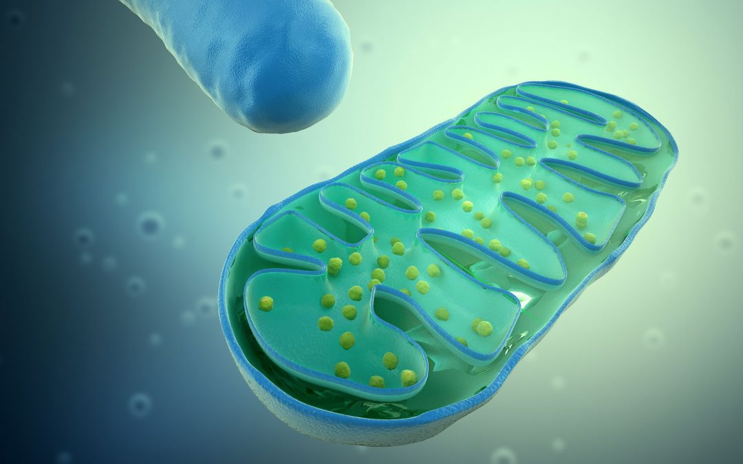 Mitochondria: the Quantum connection